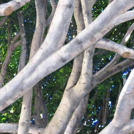 logo couleur: tree background Banque d'images