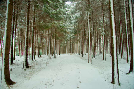 frigid: Path through snow