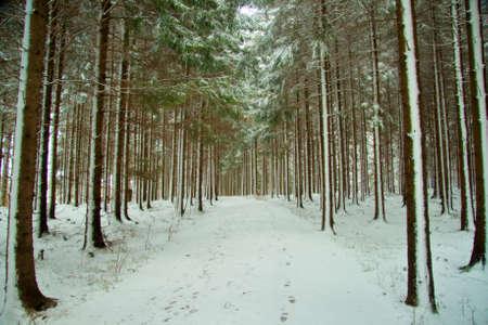 Path through snow