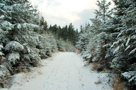 German Forest photo