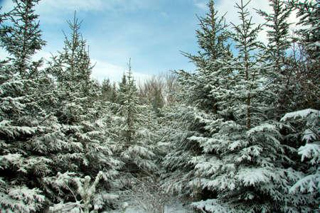 Bavarian Forest photo