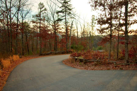 forest road photo