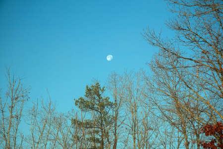 moon over trees photo