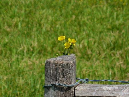 Flower on Fence Stock Photo