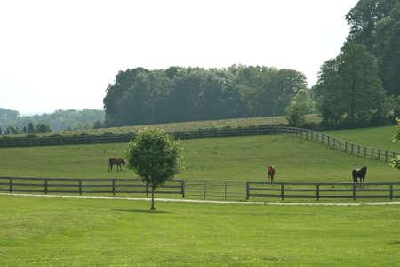 Horses in Pasture Stock Photo - 3088203