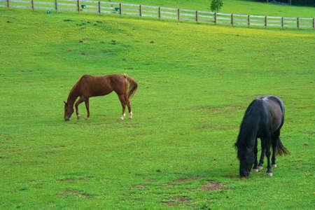 馬の放牧 写真素材