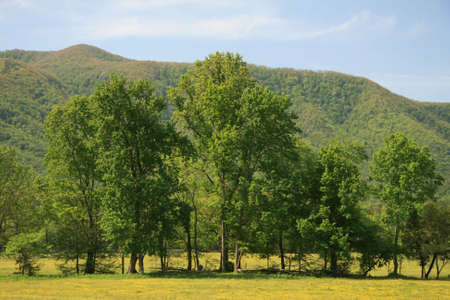 Cades Cove in the Smokies photo