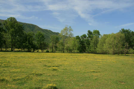 Grassland in Smokies photo