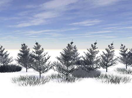 barren: Height of Winter Stock Photo