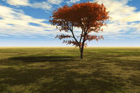 Majestic Maple Tree photo