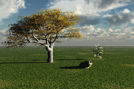 Peaceful Scene photo