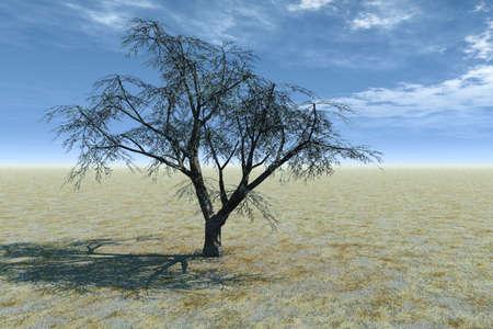 Solitary Tree Stock Photo - 3751156