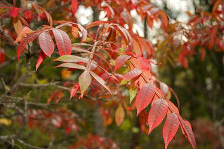 Autumn Foliage Stock Photo - 3819669