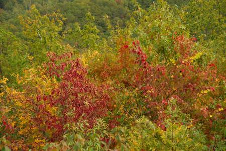 Autumn in the Smokies Stock Photo - 3819779
