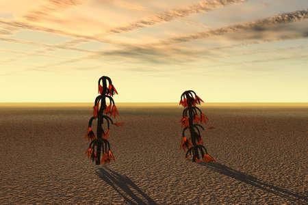 Fantasia Plants in Desert photo