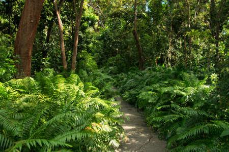 Weelderige tropische tuin