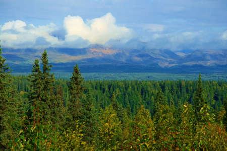 緑豊かな森林とアラスカの荒野の植物。