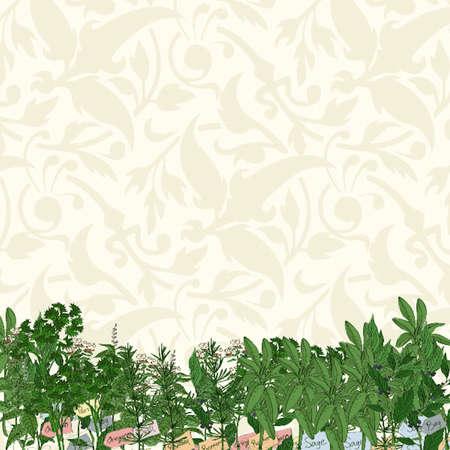 vector lines: Herbs