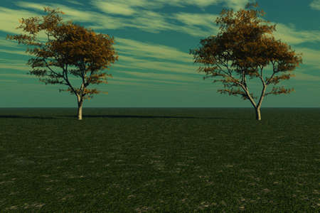 Two maple trees standing tall against the horizon. photo