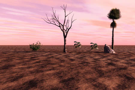 Plants and trees growing in an arid soil. photo