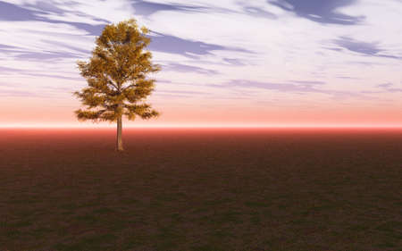 Lime tree isolated against the sky and horizon. photo