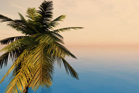 Closeup of palm tree isolated against the ocean. photo
