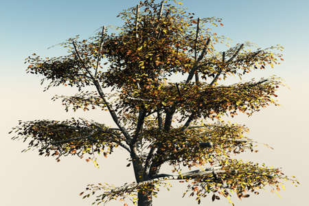 Walnut tree isolated against a soothing background. photo