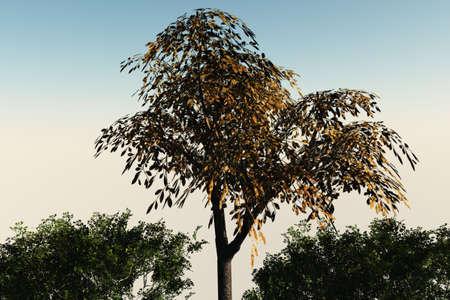Pruimenboom omgeven door toppen van andere bomen.