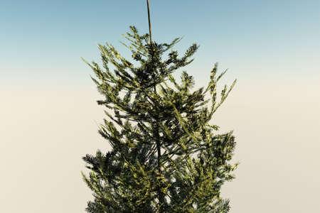 モミの木は、なだめるような背景に対して隔離されます。