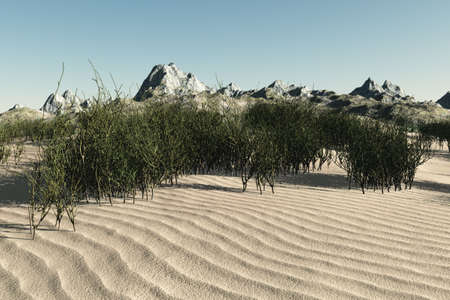 Smooth sand and numerous plants on this oasis type setting. photo