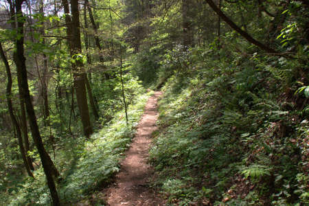 foot path: A foot path through the Smoky Mountains in Tennessee. Stock Photo