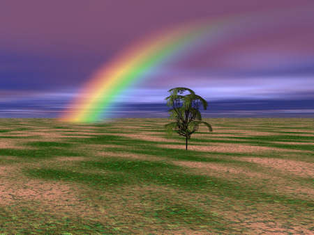Solitary tree with a brilliant rainbow in the background of this landscape. photo