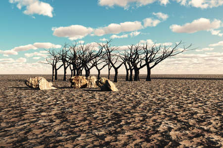 Very dry land with dead trees and stones in the distance. Stock Photo - 4895798