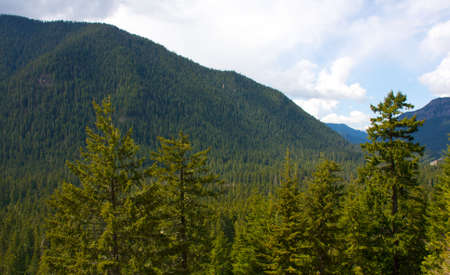Vibrant forest colors and mountains in Washington during spring. photo