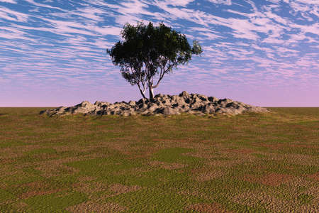 Lone tree on a pile of rocks in this countryside landscape. photo