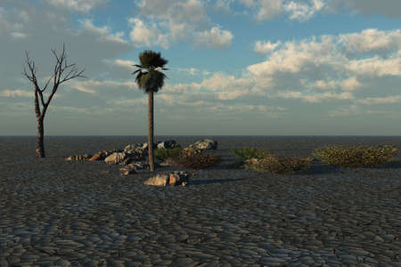 Just a palm tree, a dead tree, and rocks in this expanse of arid land.