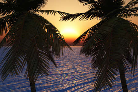 Two palm trees side by side touching as the sun goes down. Stock Photo - 6456914