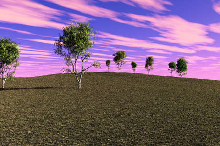 Grassy hill with a number of spring birch trees. photo