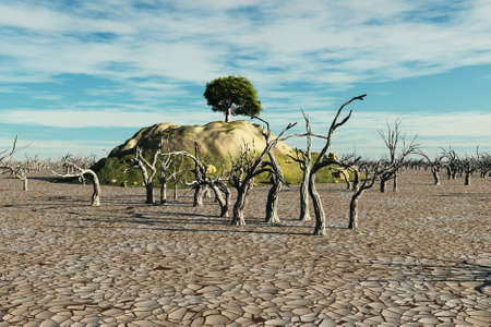 barren: Small hill with vegetation surrounded by dead trees and arid land.
