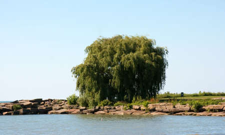 erie: Nice tree on a piece of land off of Lake Erie in Ohio. Stock Photo