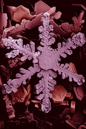 Microscopic picture of a snowflake and ice crystals