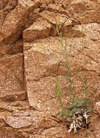 Green Plant Growing out of Barren Rock Face in Desert, StruggleDefiance