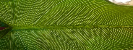 Veins of Green Leaf Visible in Light of Summer Sunset