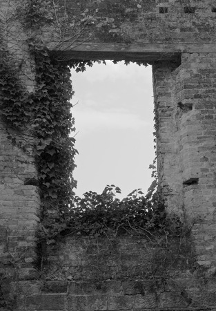 Black and White of an Old Empty Brick Window with Ivy Growning Around it