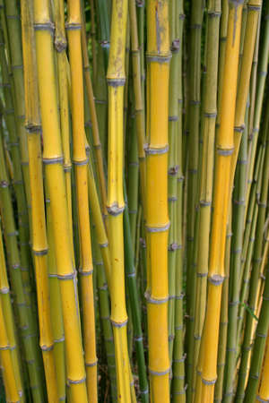 Bamboo growing wild Stock Photo