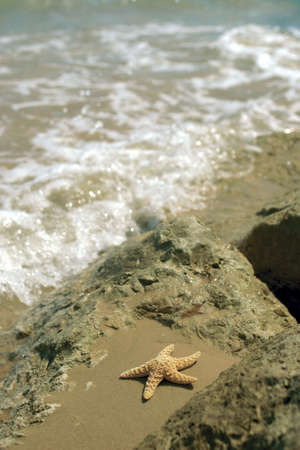 A starfish in rocks on a beach as the sea rushes in photo
