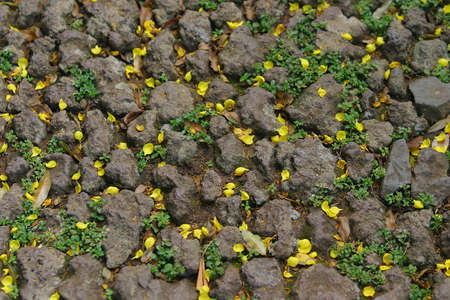 Fallen petals mix with plants growing through the rocks on a footpath photo