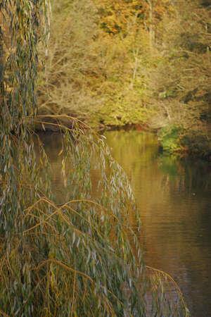ratty: Una vista del fiume Tamigi, immerso nella luce dorata con un albero di salice piangente a fuoco in primo piano