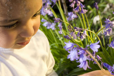 A beautiful mixed race little girl picking bluebells bathed in sunshine. Stock Photo - 408001
