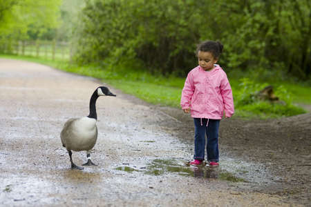 A little girl confronts a Canada goose over a puddle photo